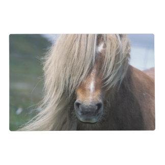 UK, Scotland, Shetland Islands, Shetland pony Laminated Placemat