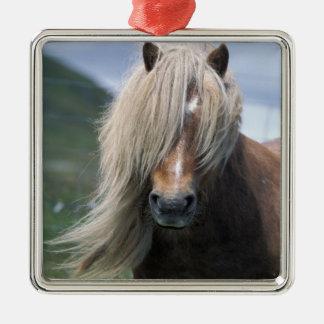 UK Scotland Shetland Islands Shetland pony Christmas Ornament