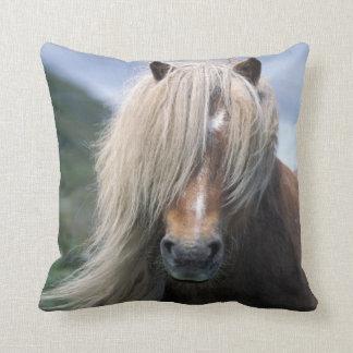 UK Scotland Shetland Islands Shetland pony Pillows