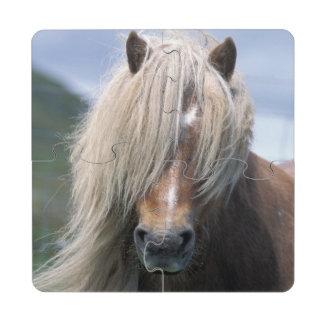 UK Scotland Shetland Islands Shetland pony Puzzle Coaster