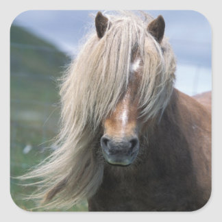 UK Scotland Shetland Islands Shetland pony Stickers