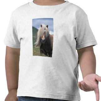 UK Scotland Shetland Islands Shetland pony T-shirt