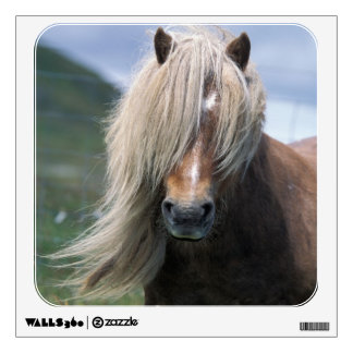 UK Scotland Shetland Islands Shetland pony Wall Decor