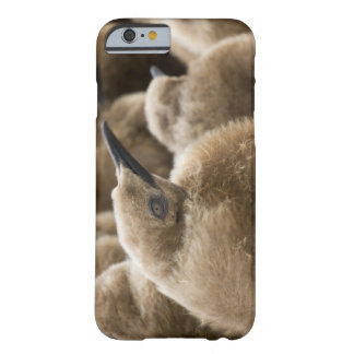 UK Territory, South Georgia Island. Close-up of Barely There iPhone 6 Case