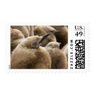 UK Territory, South Georgia Island. Close-up of Postage Stamps
