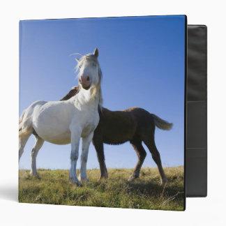 UK, Wales, Brecon Beacons NP. Wild Pony Vinyl Binder