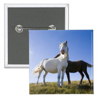 UK, Wales, Brecon Beacons NP. Wild Pony Pin