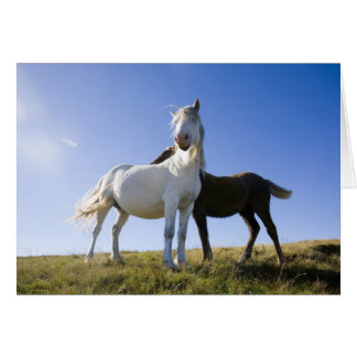UK, Wales, Brecon Beacons NP. Wild Pony Greeting Cards