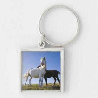 UK, Wales, Brecon Beacons NP. Wild Pony Key Chain