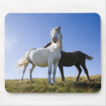 UK, Wales, Brecon Beacons NP. Wild Pony Mouse Pad