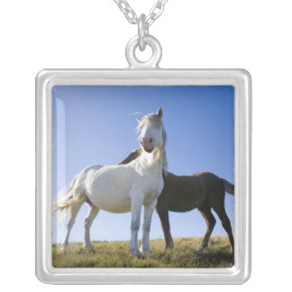 UK, Wales, Brecon Beacons NP. Wild Pony Personalized Necklace