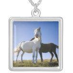 UK, Wales, Brecon Beacons NP. Wild Pony Square Pendant Necklace