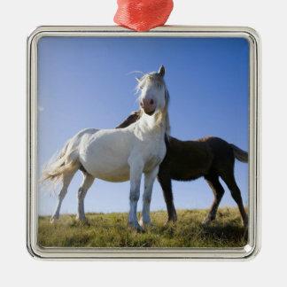UK, Wales, Brecon Beacons NP. Wild Pony Ornament