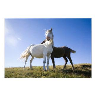 UK, Wales, Brecon Beacons NP. Wild Pony Art Photo