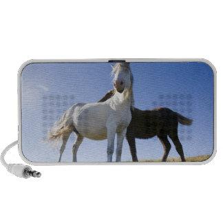 UK, Wales, Brecon Beacons NP. Wild Pony Portable Speaker