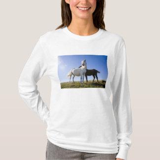 UK, Wales, Brecon Beacons NP. Wild Pony T-Shirt