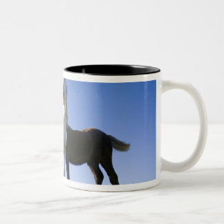 UK, Wales, Brecon Beacons NP. Wild Pony Two-Tone Coffee Mug