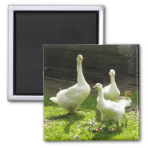 Ukrainian Geese Magnet