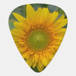 Ukranian Sunflowers Guitar Pick