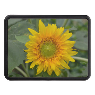Ukranian Sunflowers Hitch Cover