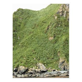 Ulak Island Postcard