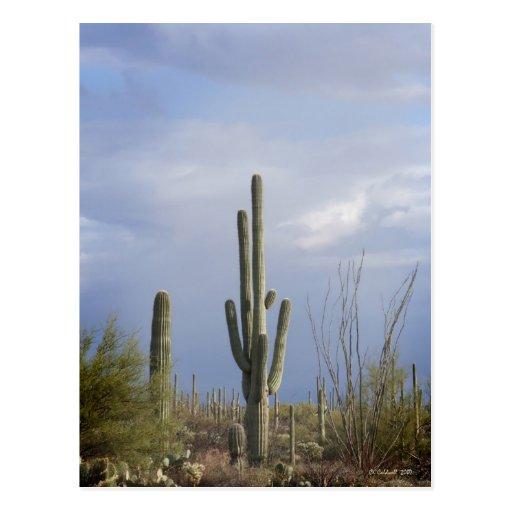 Última hora de la tarde en el desierto postales
