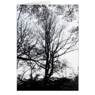 Último árbol casi estéril B&W del otoño del Centra Felicitaciones