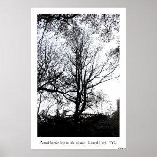 Último árbol casi estéril B&W del otoño del Póster