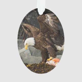 Último Eagle calvo