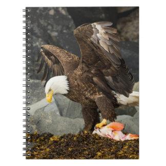 Último Eagle calvo Cuaderno