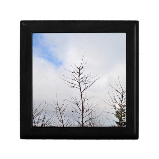 Último paisaje del invierno con los árboles secos cajas de regalo