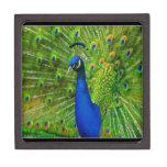 último peacock.jpg caja de regalo de calidad