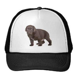 Ultra Cute Six Week Old Chocolate Labrad Trucker Hat