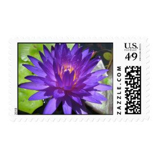Ultra Violet Stamps