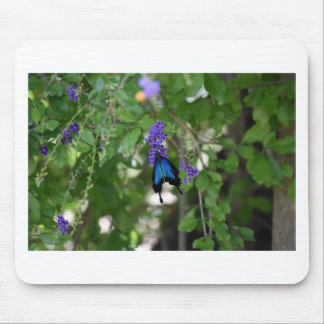ULYSSES BLUE BUTTERFLY RURAL QUEENSLAND AUSTRALIA MOUSE PAD