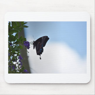 ULYSSES BUTTERFLY AUSTRALIA ART EFFECTS MOUSE PAD