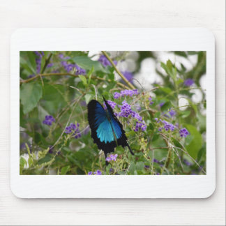 ULYSSES BUTTERFLY IN RURAL QUEENSLAND AUSTRALIA MOUSE PAD