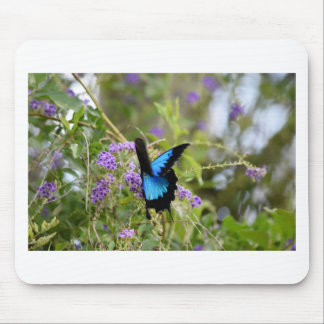 ULYSSES BUTTERFLY RURAL QUEENSLAND AUSTRALIA MOUSE PAD