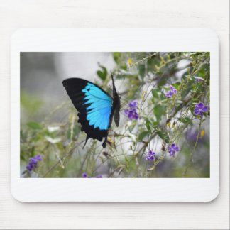 ULYSSES PAPILIO BUTTERFLY QUEENSLAND AUSTRALIA MOUSE PAD