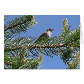 Umatilla National Forest  Fauna Birds Aves Animals Greeting Cards