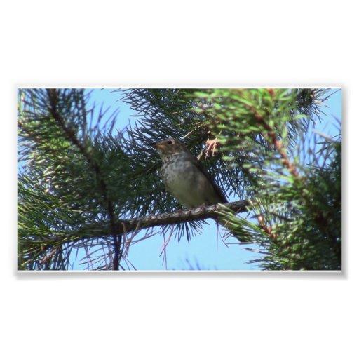 Umatilla National Forest  Fauna Birds Aves Animals Photo Art