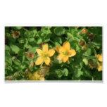 Umatilla Oregon Flora Flowers Plants Botany Photo Print