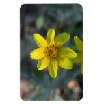 Umatilla Oregon Flora Flowers Plants Botany Flexible Magnets