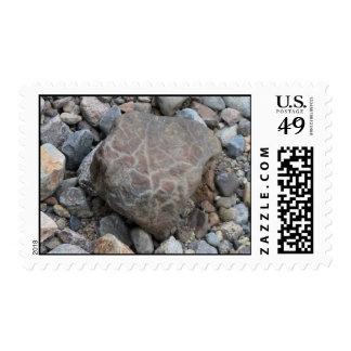 Umatilla Oregon Geology Rocks Earth History Stone Stamps