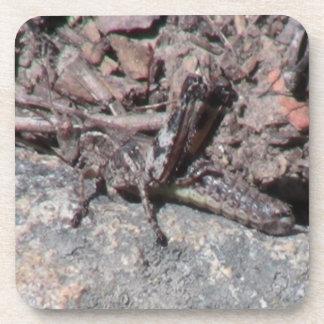 Umatilla Oregon  Insects / Arachnids Bugs Fauna Coaster