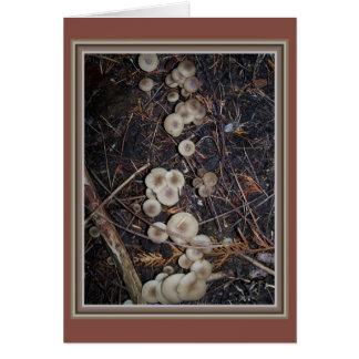 Umber quemado del racimo fungoso y tarjeta blanca