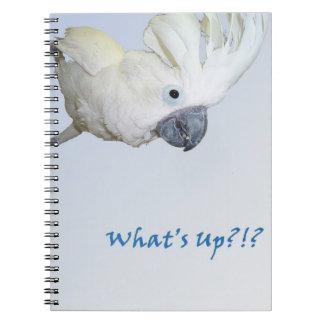 Umbrella Cockatoo asking Whats Up Notebook