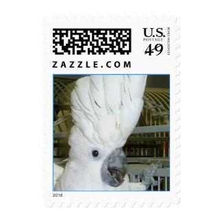Umbrella Cockatoo (Small) Postage