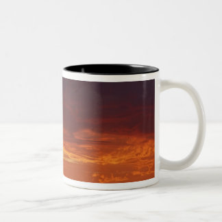 Umbrella Thorn Acacia, Acacia tortilis, 2 Two-Tone Coffee Mug