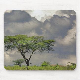 Umbrella Thorn Acacia, Acacia tortilis, and 2 Mouse Pad